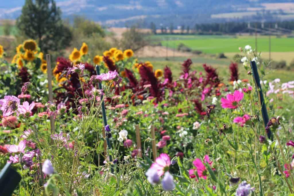 Shenandoah Knoll Flower Farm - Armstrong BC
